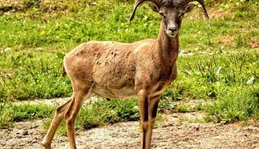 占星術ホロスコープで牡羊座♈️を読み解くと何がわかる?【♈️=開拓者・イノベーターの象徴】