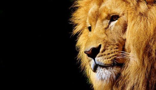 占星術ホロスコープで獅子座♌️を読み解くと何がわかる?【♌️=個性を見せる演出家の象徴】